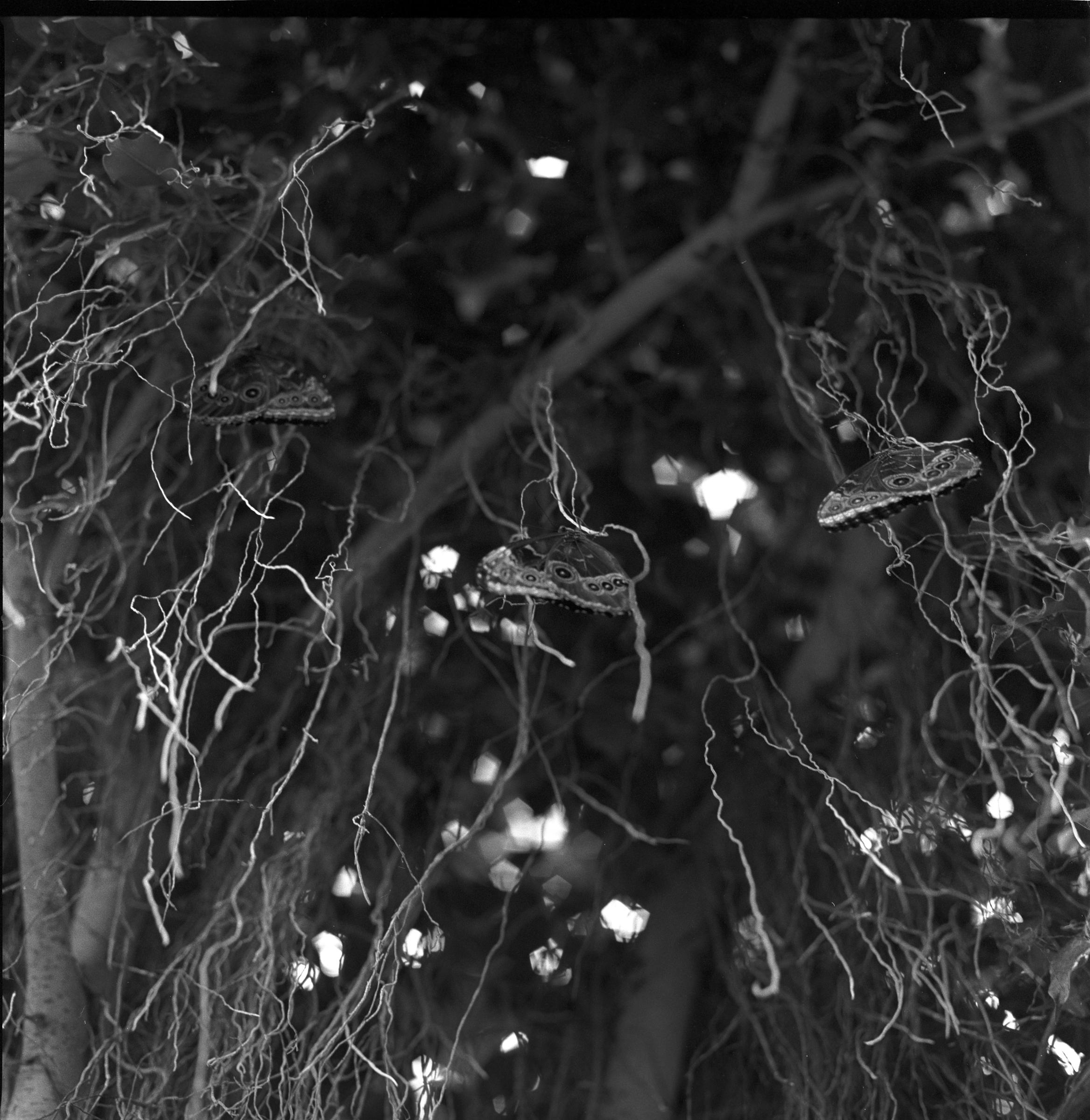 butterflies2005.jpg