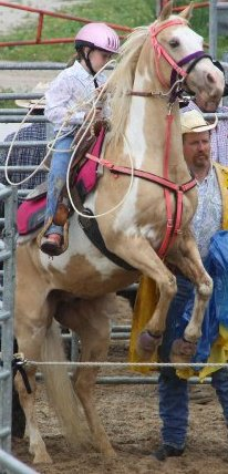 chayhorse3.jpg