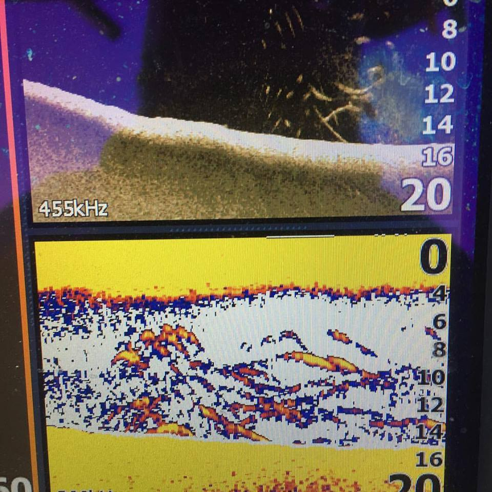 Schoolie Stripers being marked on my Lowrance fishfinder. It has looked like this for 5 days straight.