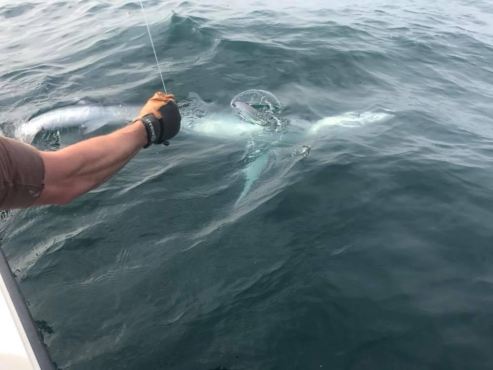 Shark Fishing Newburyport New Hampshire.jpg