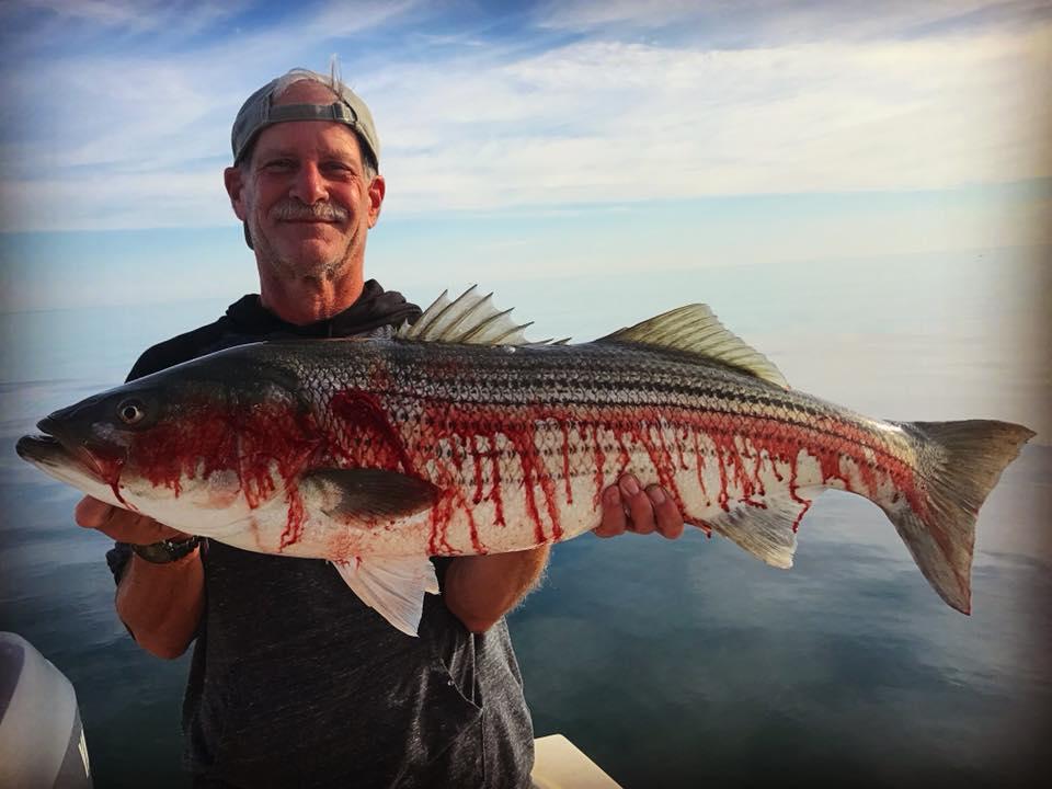 striped bass charter newburyport plum island .jpg