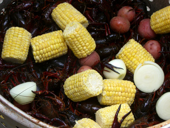 Here's the crawfish before they are cooked. Included in the mixture are corn, potatoes, lemon, butter and spices.