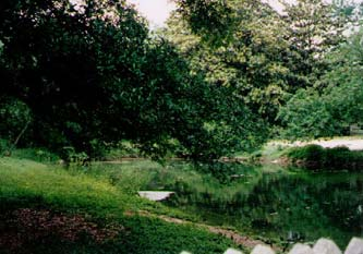 This is the inspiration for the pond in BRIDE.