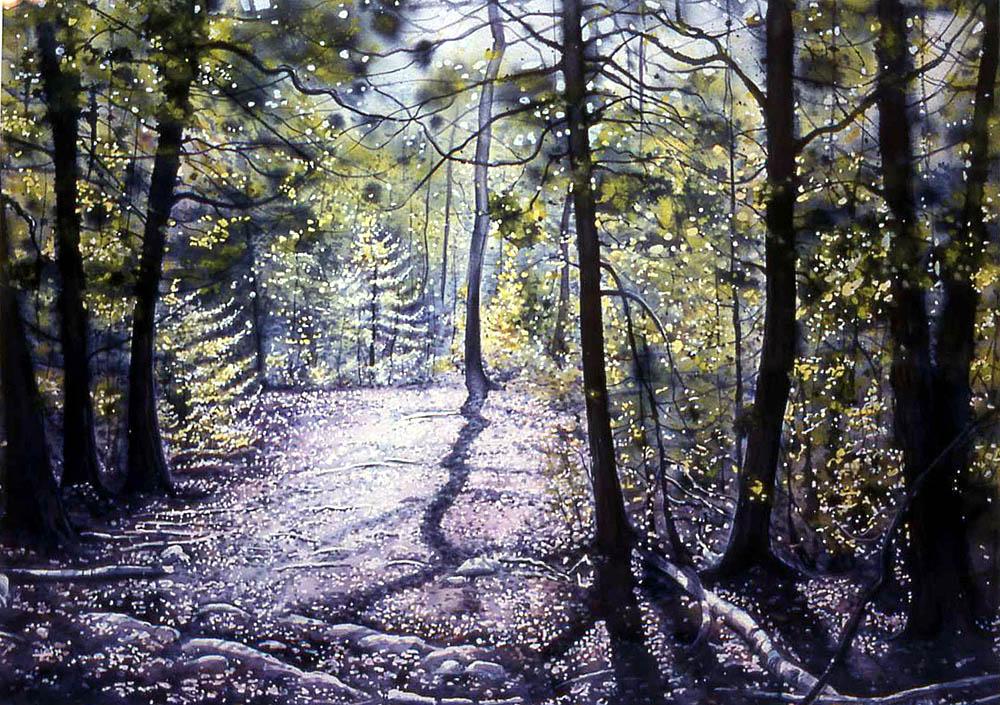 forest_path.jpg