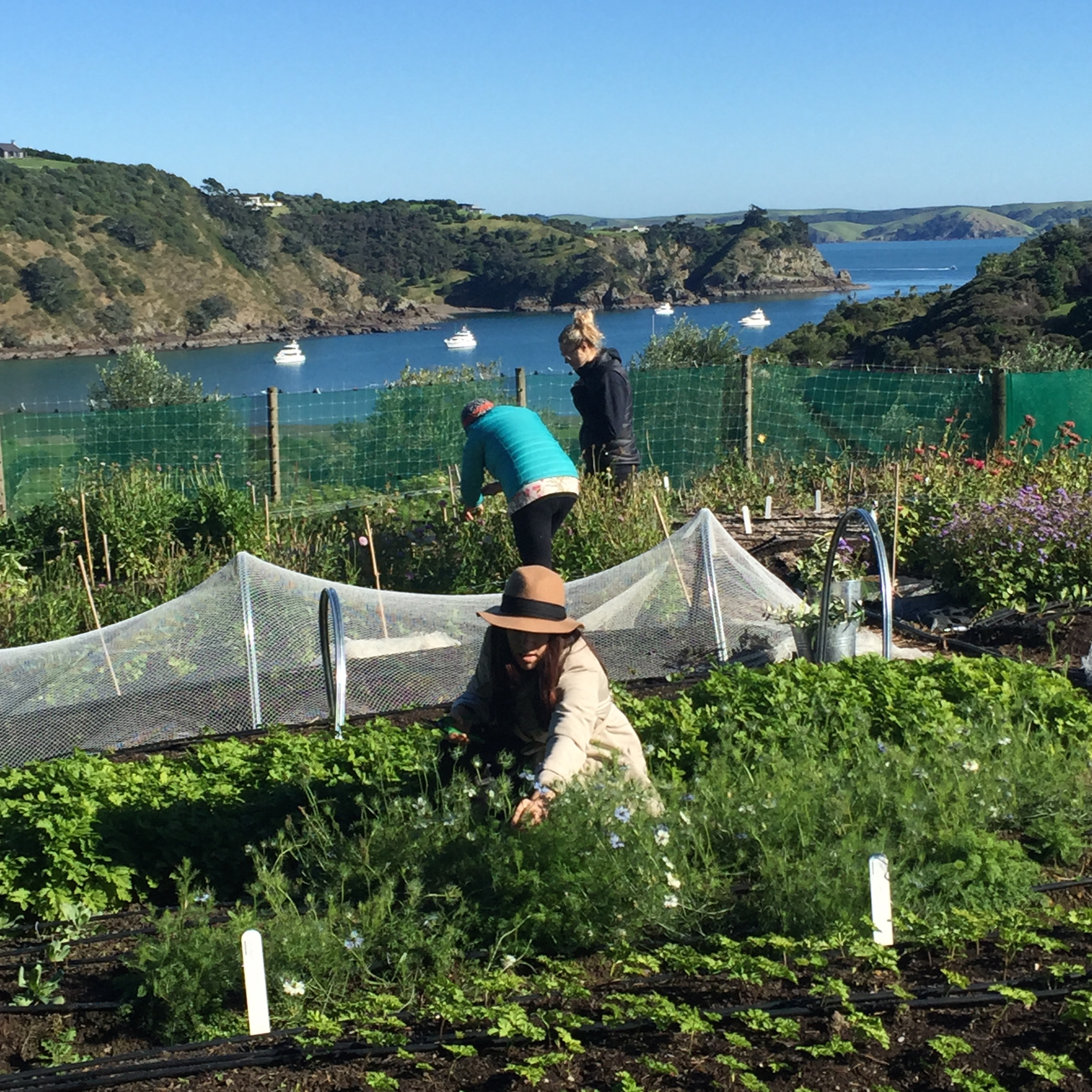 NOURISH GARDENS... a visit to our local flower farm is an essential beginning to the course...it's foraging heaven!