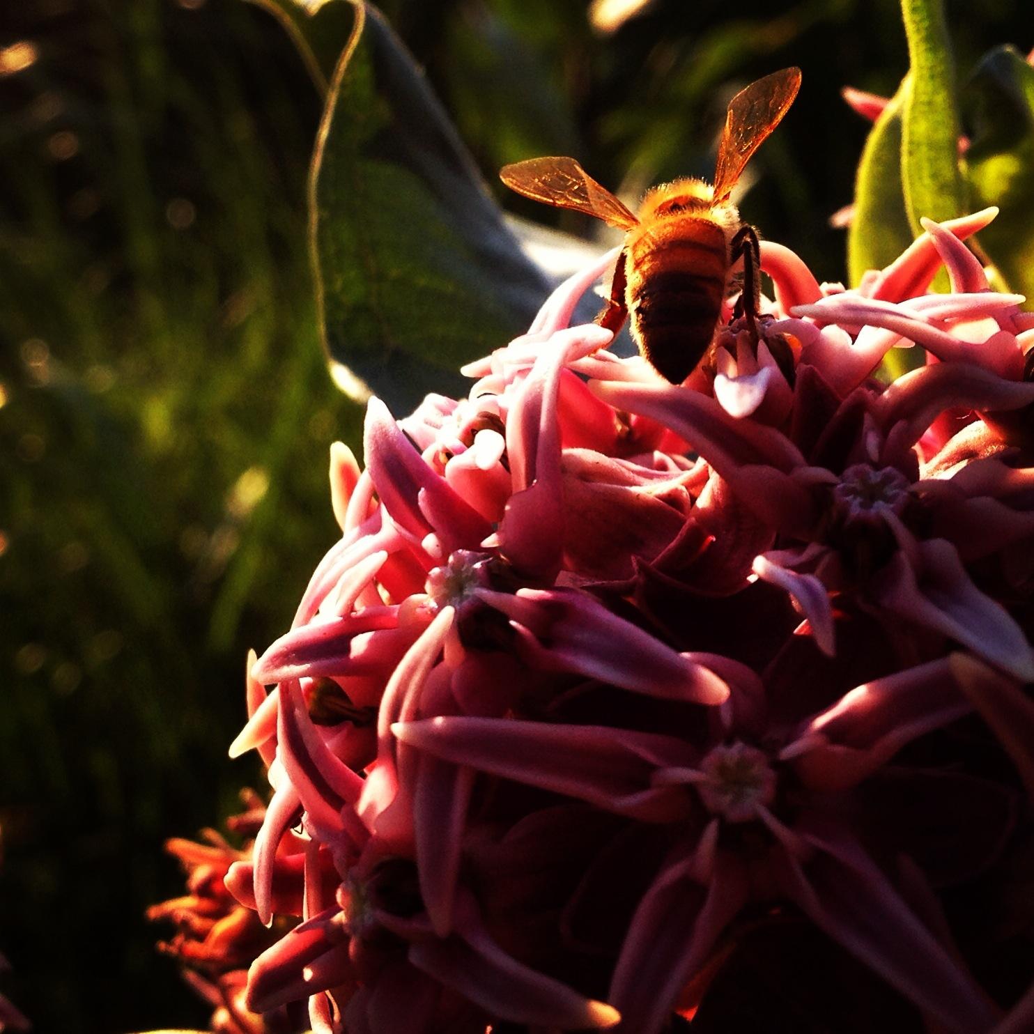 Bee & flower.
