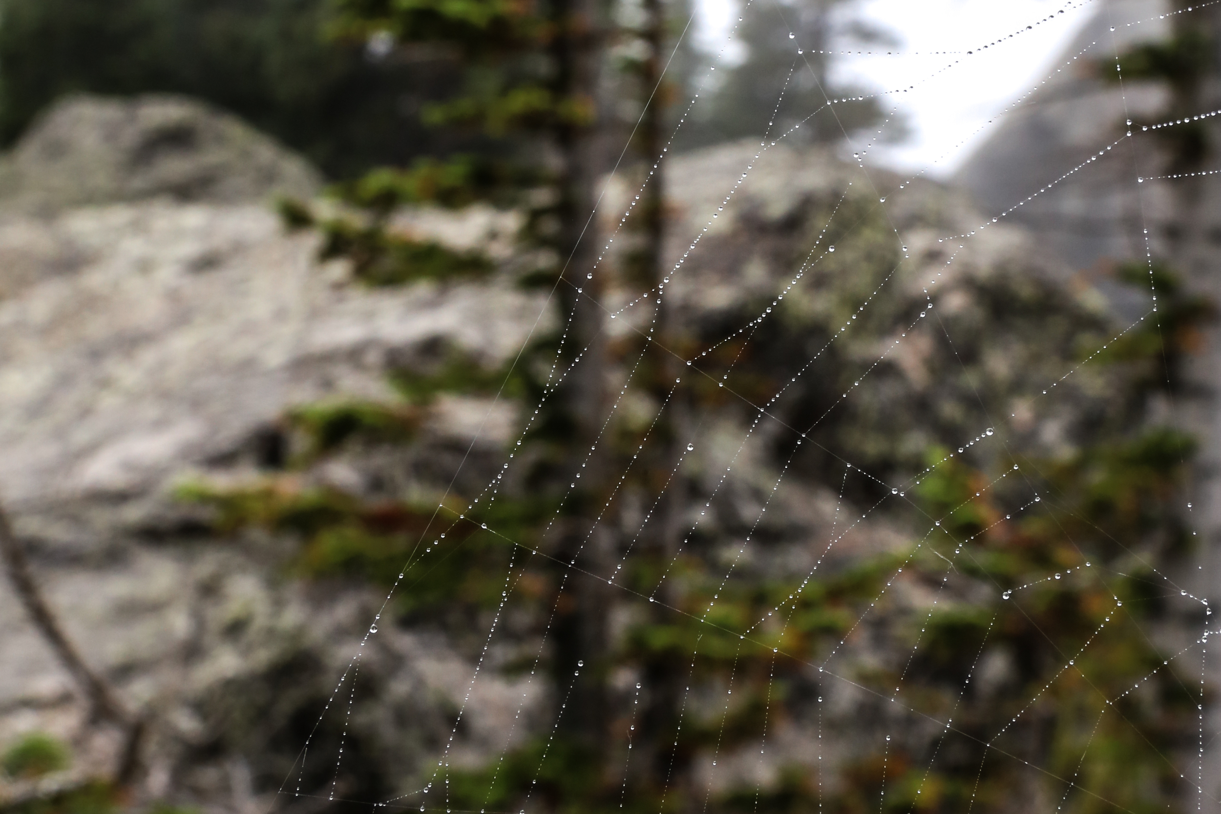 Dew on a spider web, Chaos Canyon