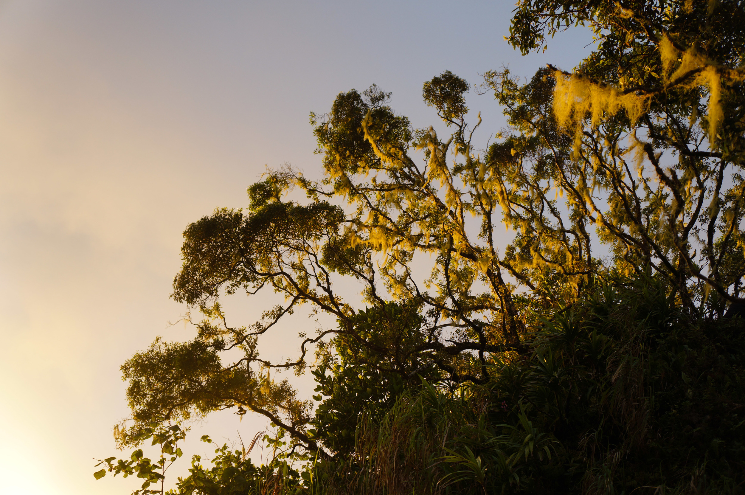 The little knoll of mossy trees at sunset.