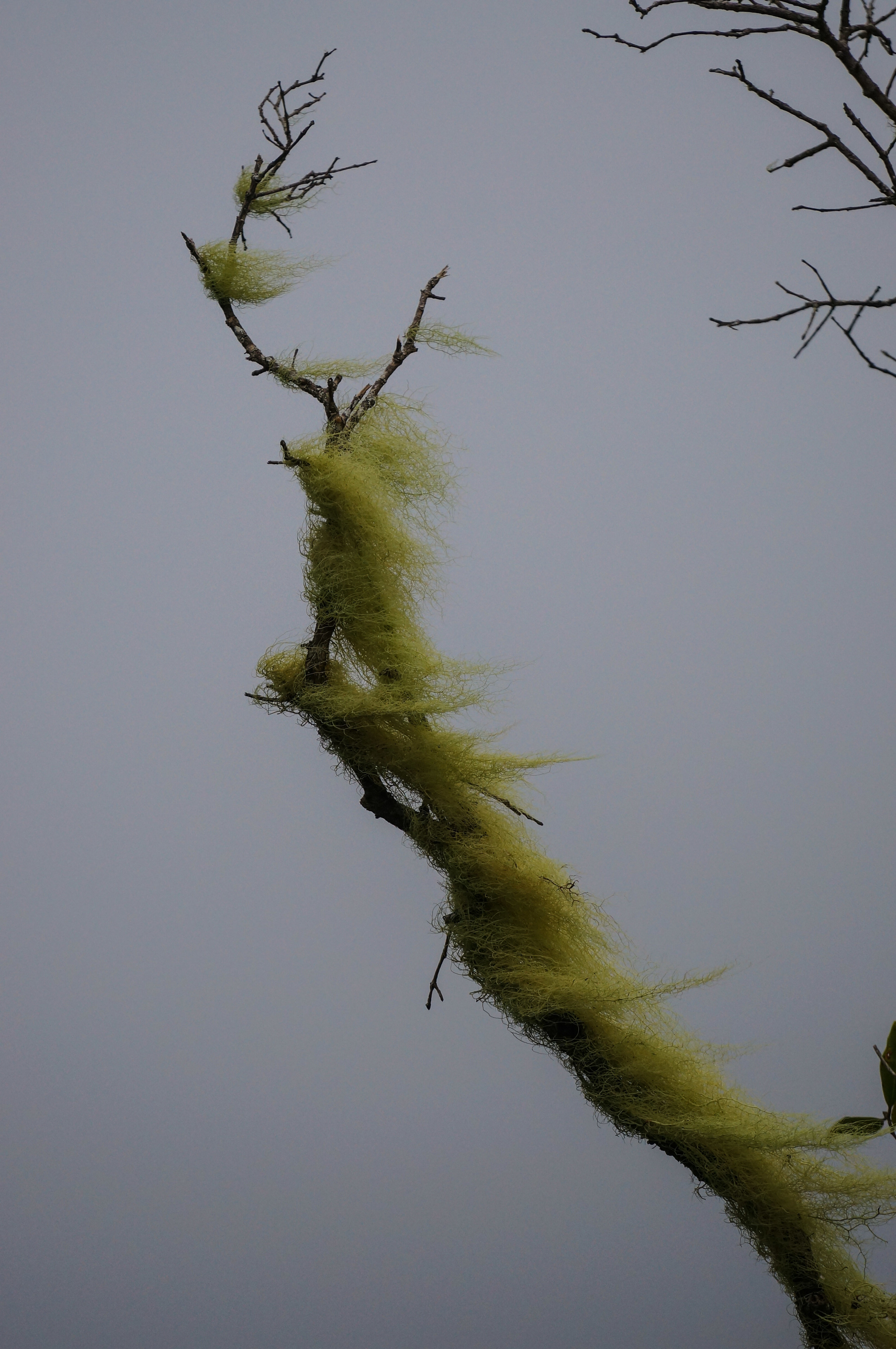 More moss.