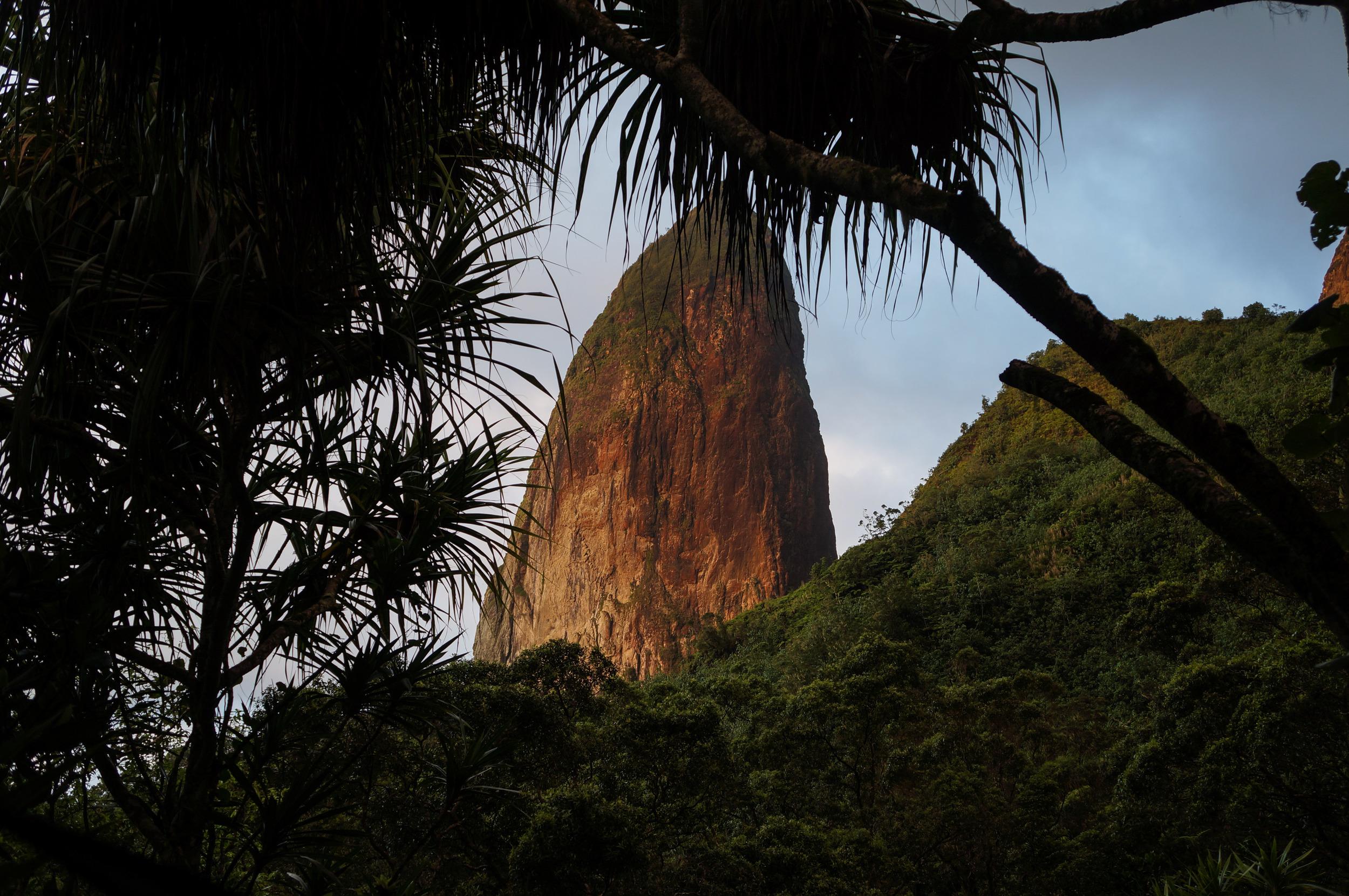 Poutetainui through the trees of low camp.