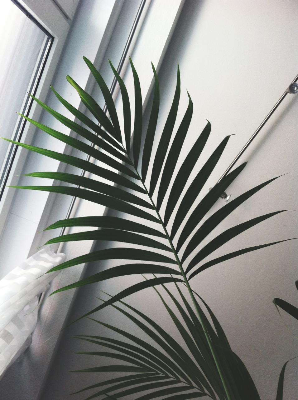 Ferns in good light next to window ITCHBAN.com