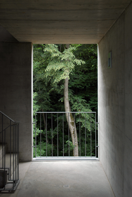Concrete building stairs corridor with tree ITCHBAN.com