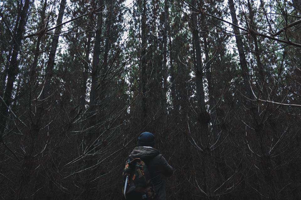 BELANLGO STATE FOREST ITCHBAN.com 005.jpg