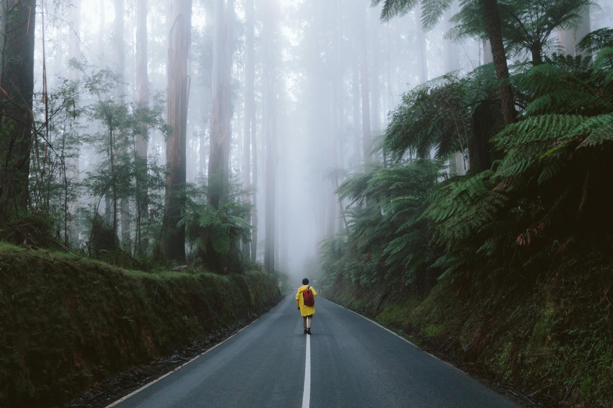 Black Spur Fog Visit Victoria
