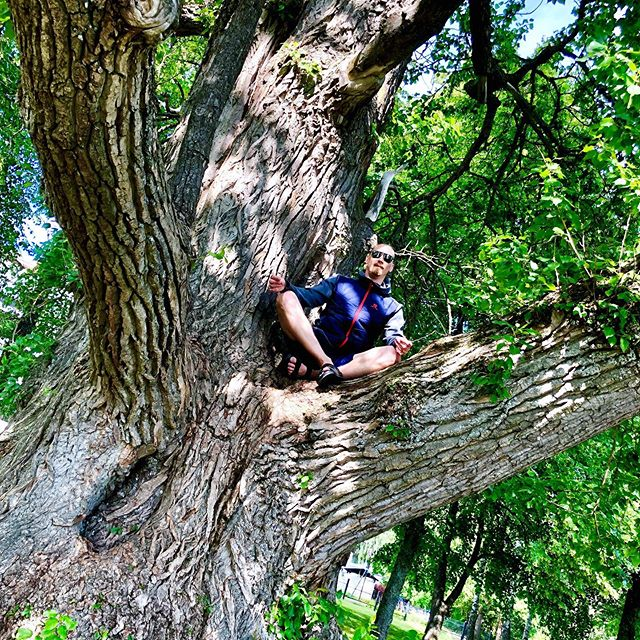 Feeling the life of the biggest tree 🌳 in Finland, Popolus Petrowskiana. Estimated to be over 150yrs old.