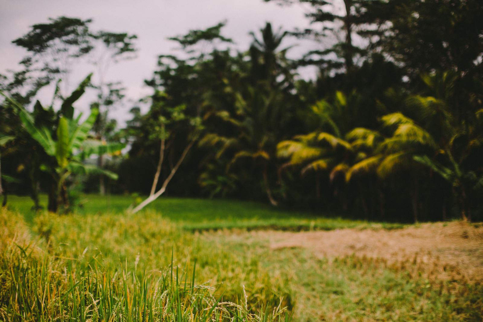 Bali Aug 15-Dean Raphael-22.jpg