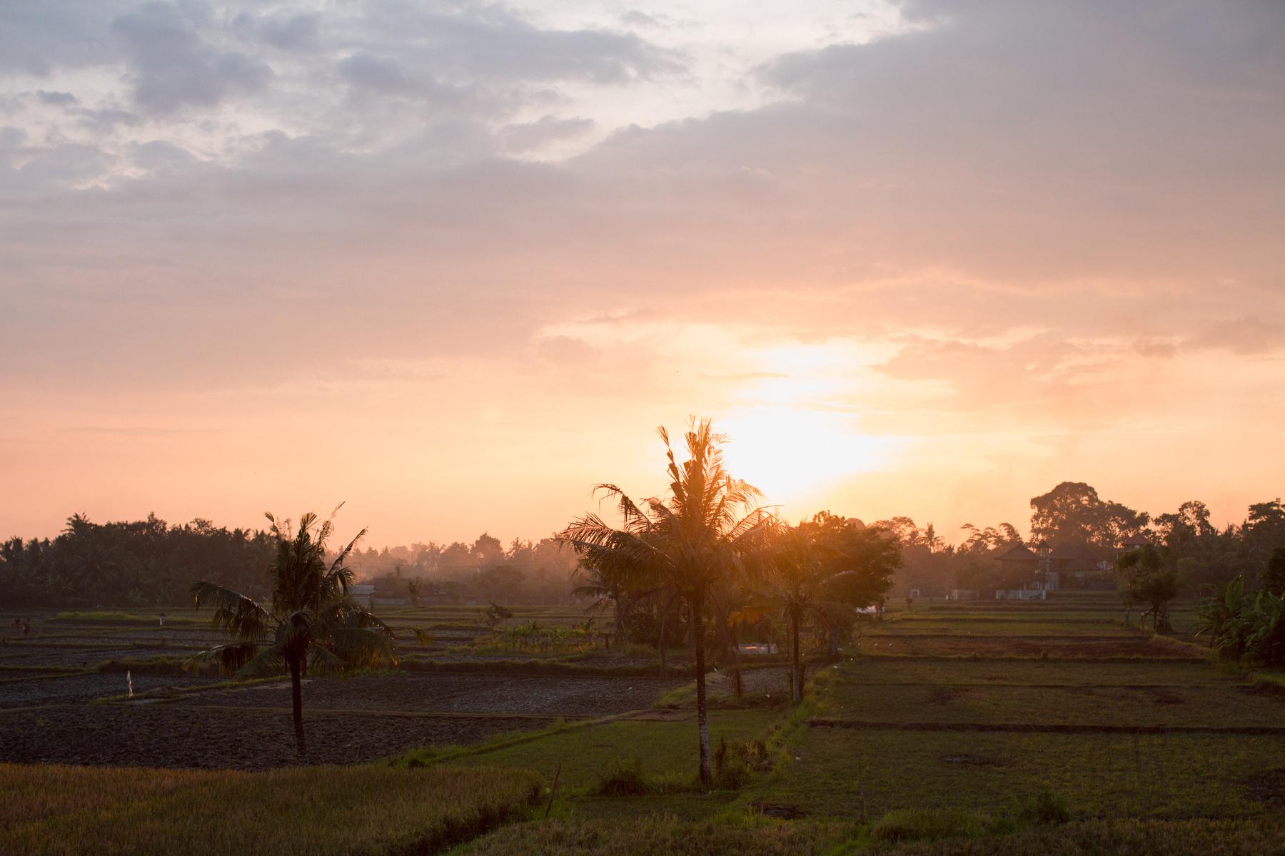 Ubud Bali 2017-Dean Raphael-3.jpg