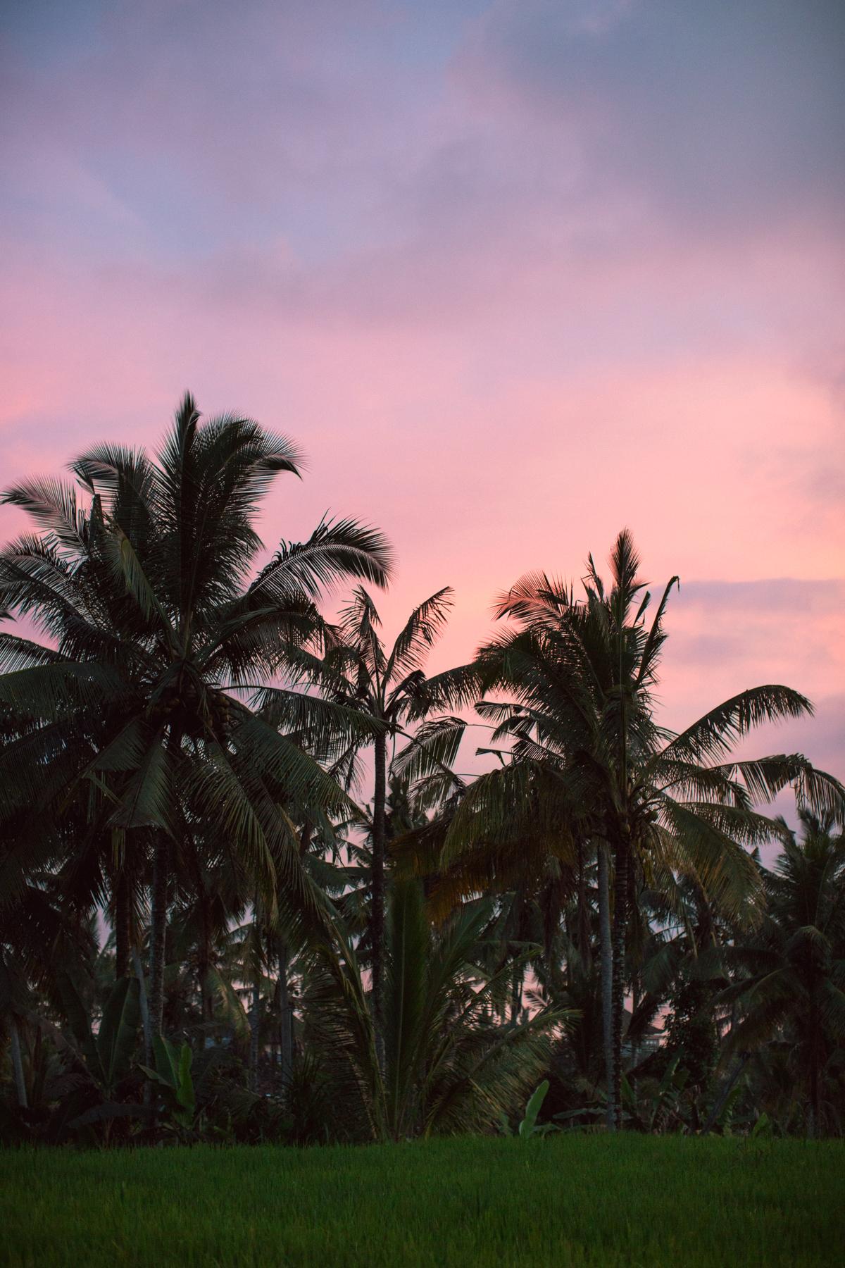 Ubud Bali 2017-Dean Raphael-18.jpg