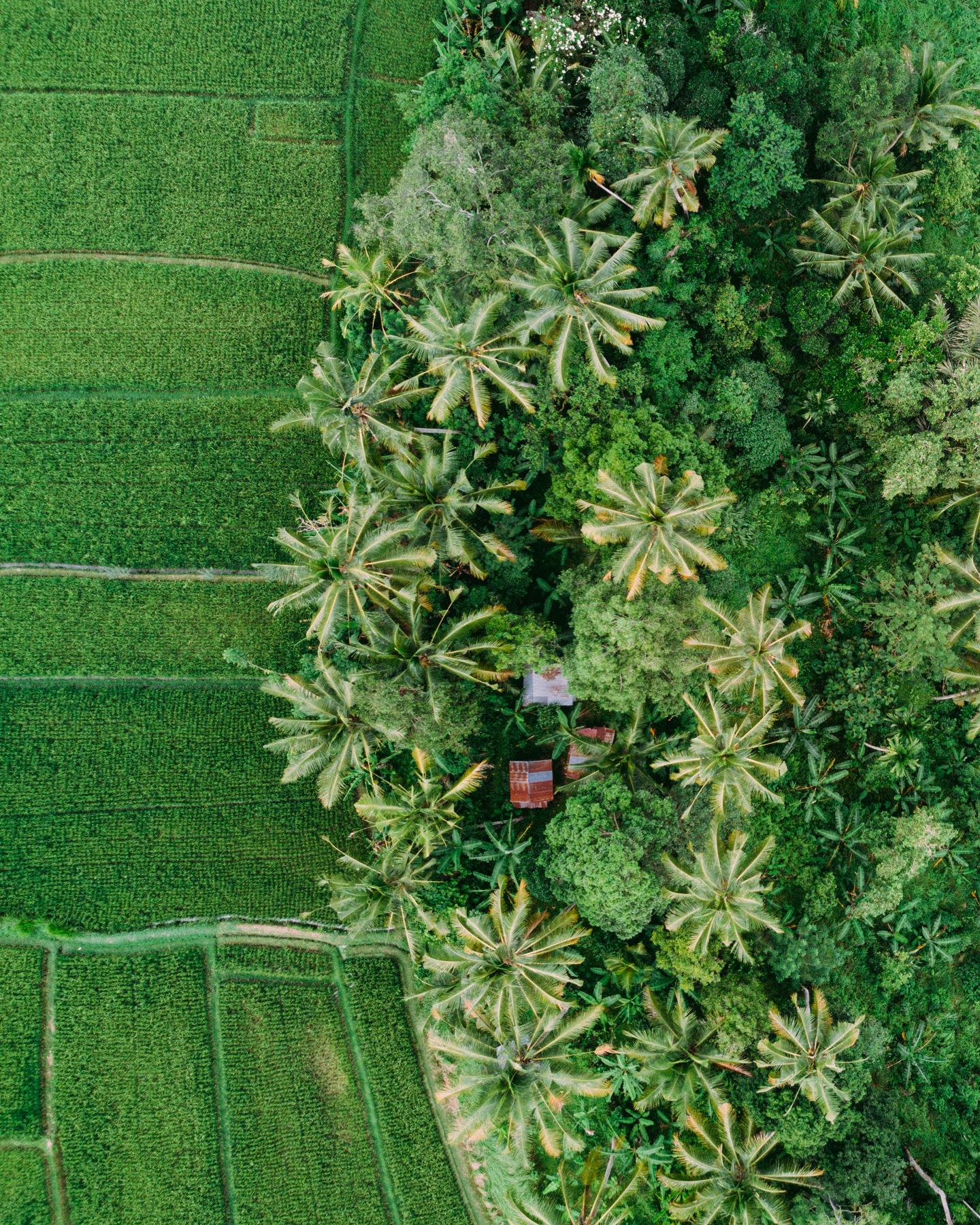 Ubud Bali 2017-Dean Raphael-56.jpg