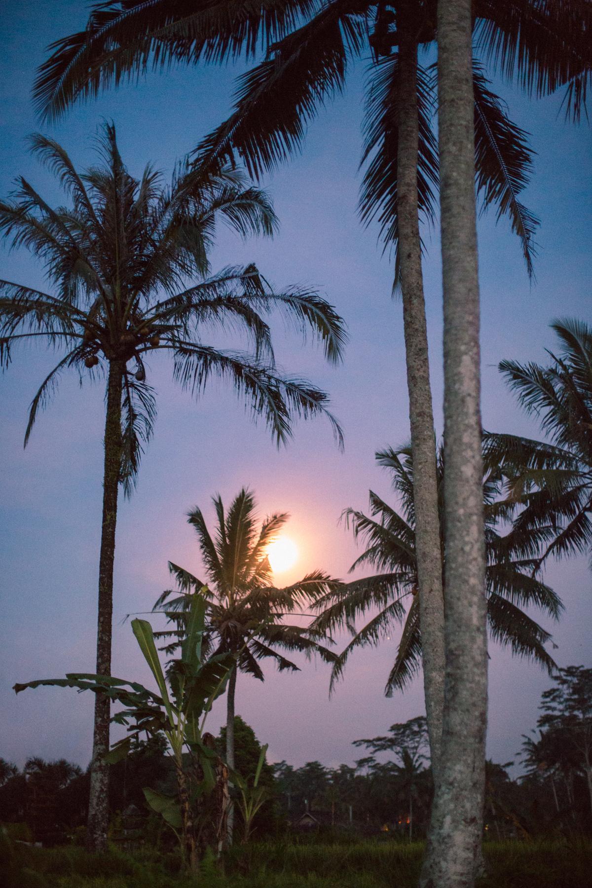 Ubud Bali 2017-Dean Raphael-79.jpg