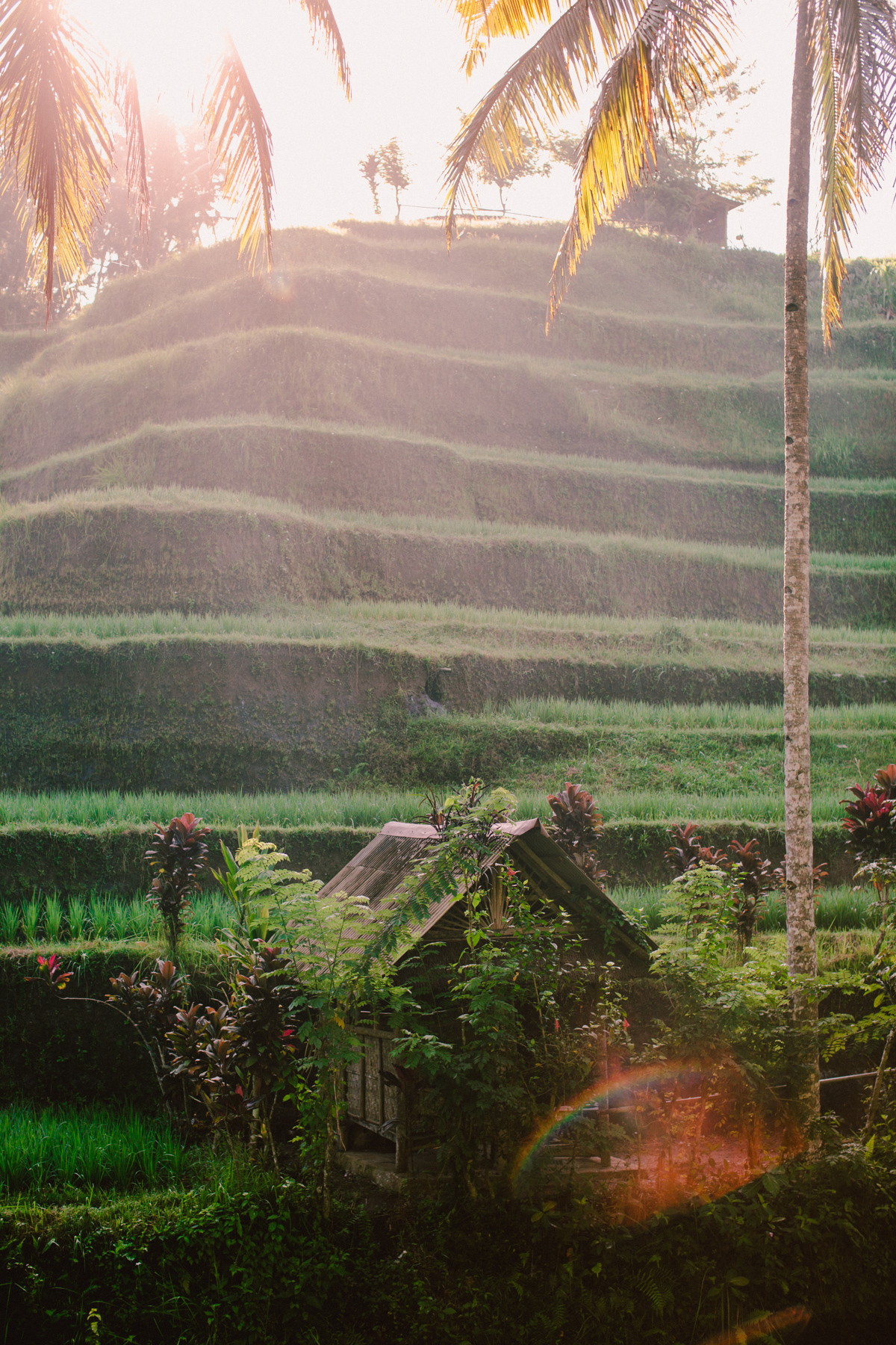 Ubud Bali 2017-Dean Raphael-89.jpg