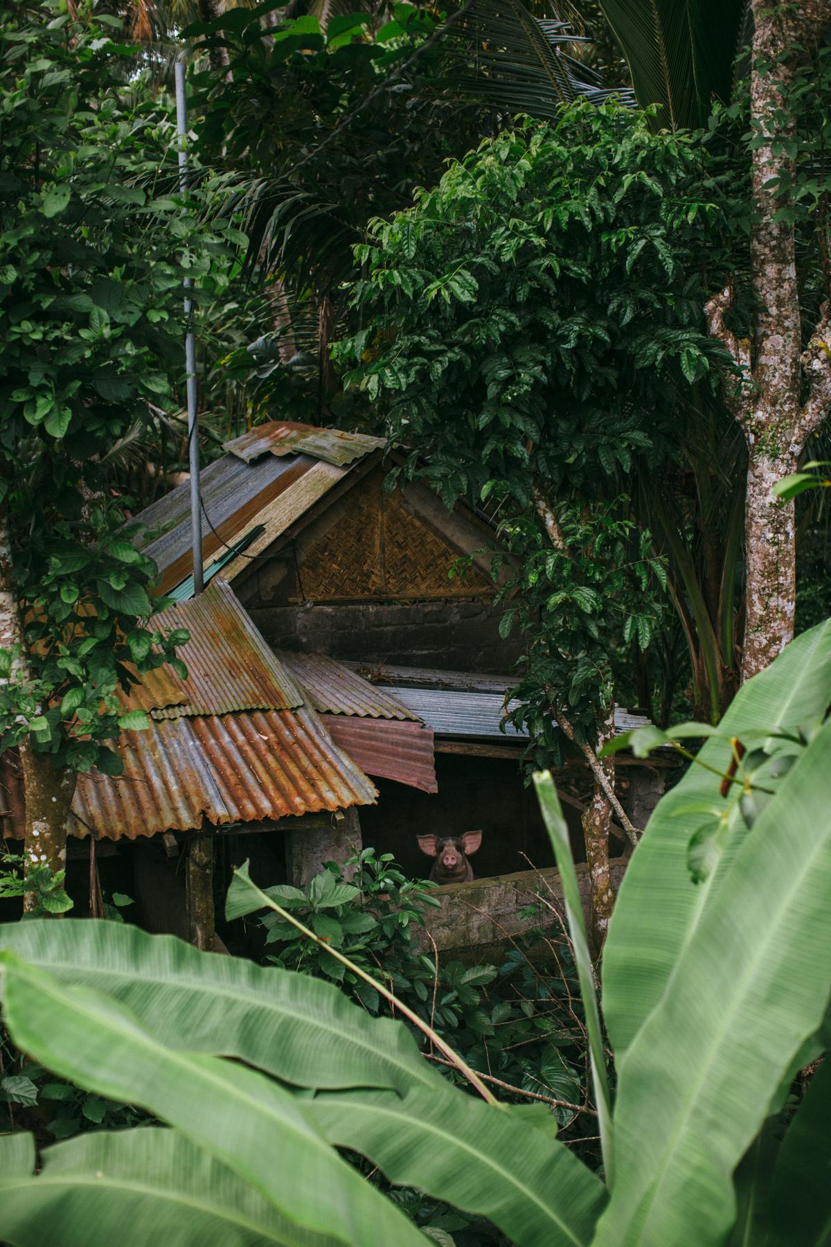 Ubud Bali 2017-Dean Raphael-116.jpg