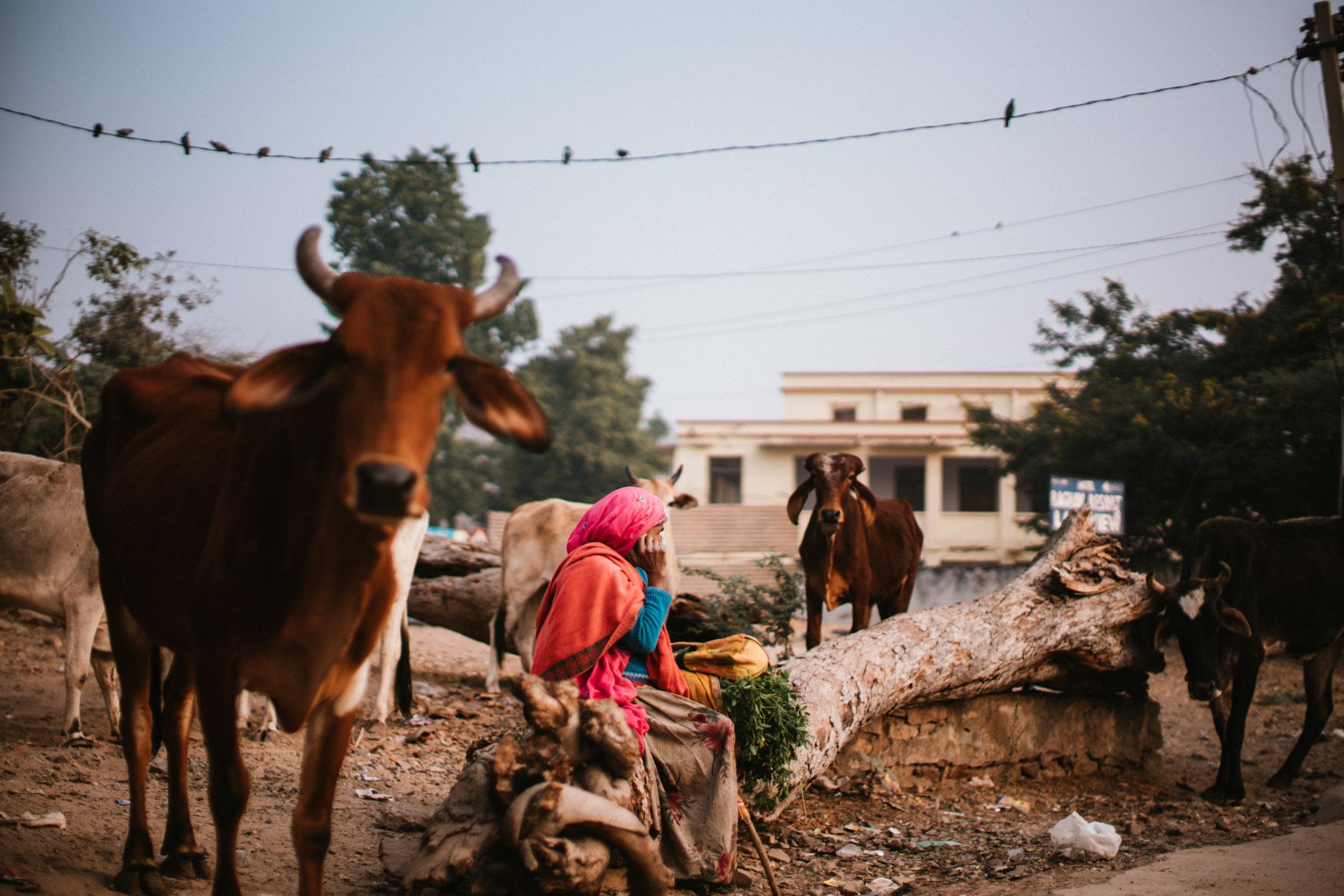 Pushkar Nov 2017-Dean Raphael Photography-2.jpg