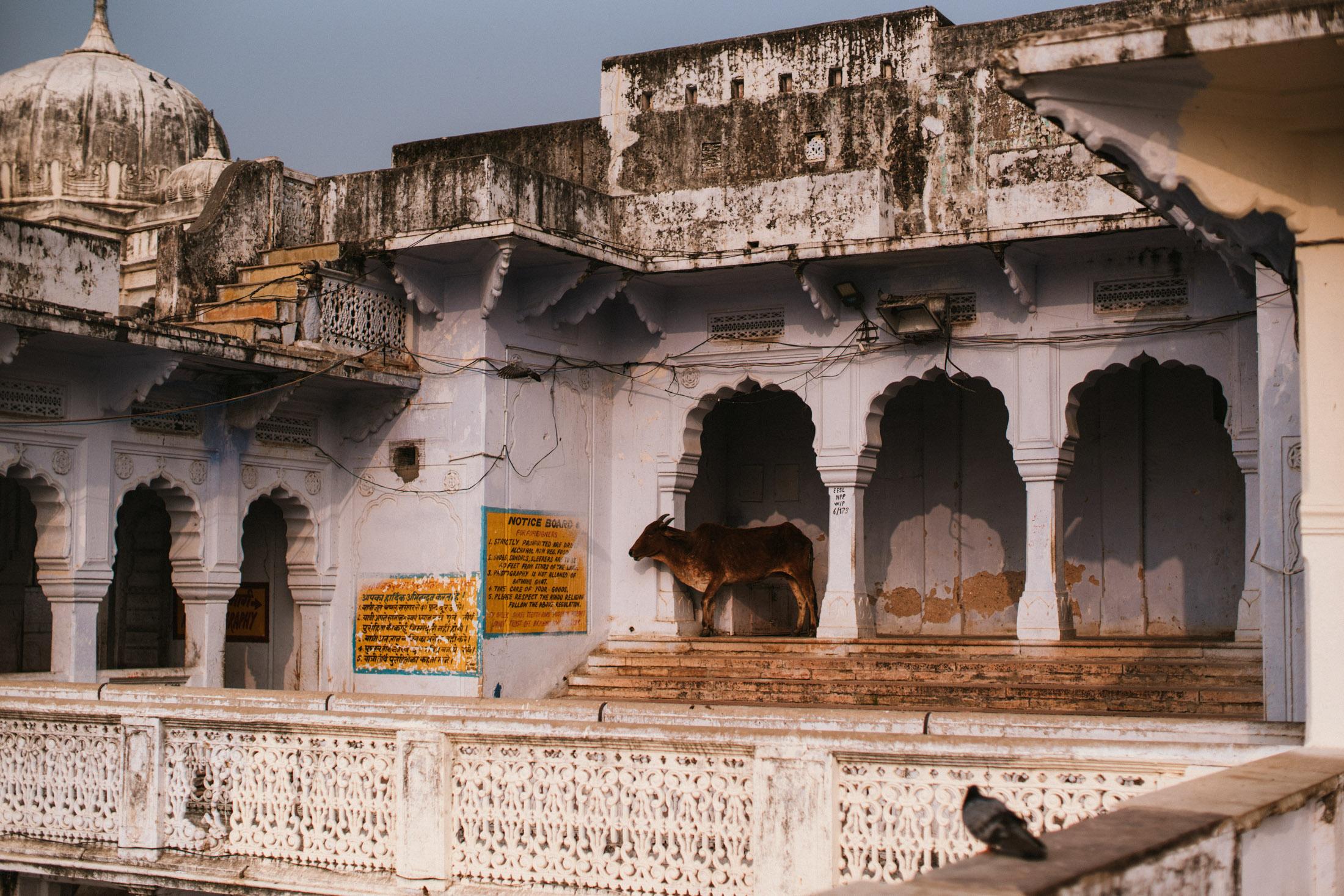 Pushkar Nov 2017-Dean Raphael Photography-12.jpg