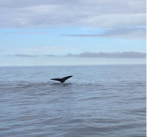 From our whale watch in Cape Cod, Mass. 2015