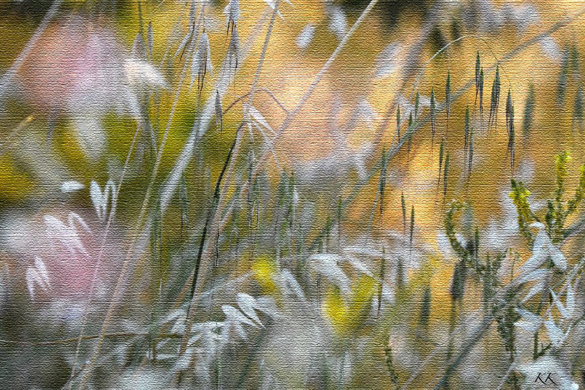 wildflowersoffrance.jpg