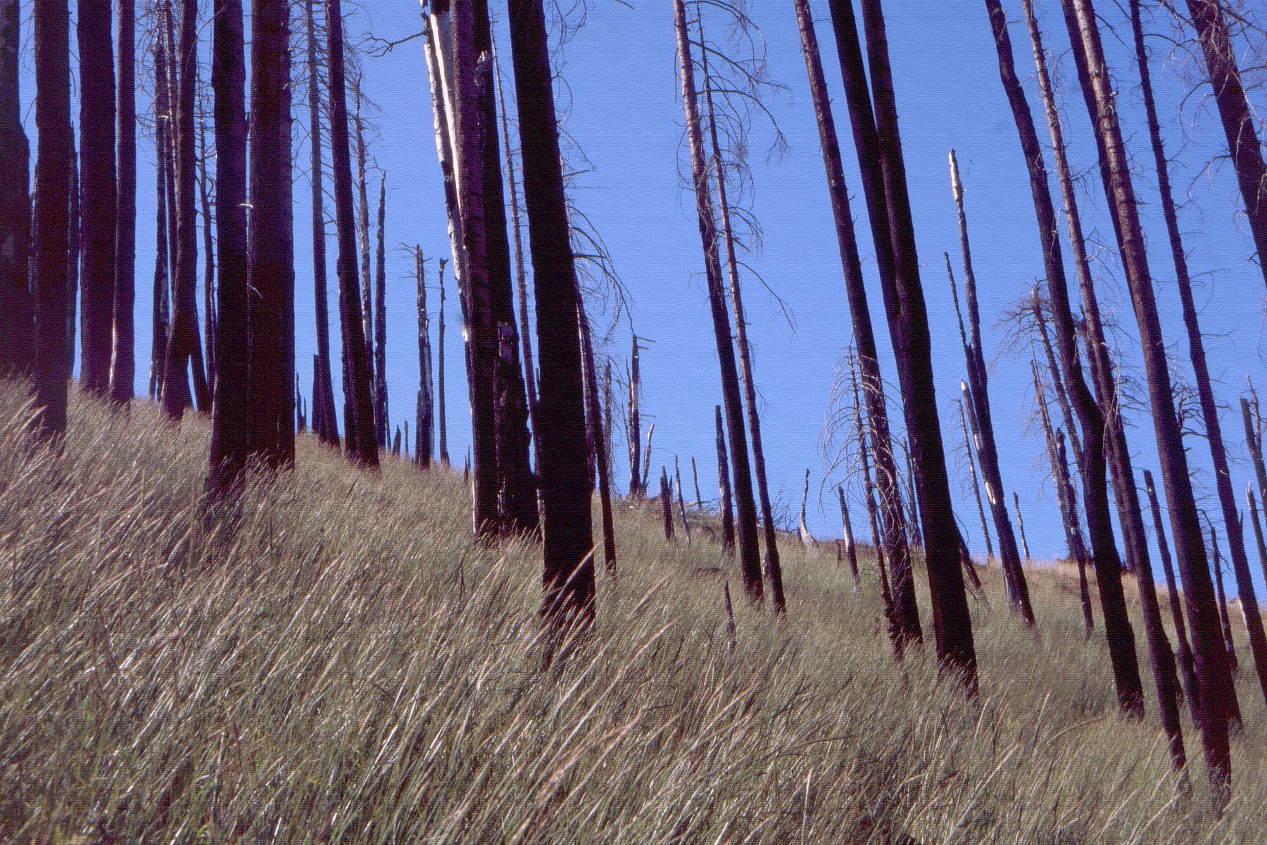grasstrees0071.jpg