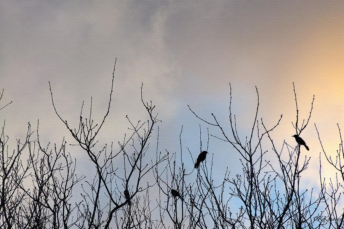blackbirdsnature.jpg