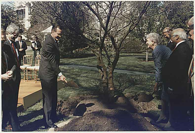 President and Mrs. Bush participate in a tree planting ceremony on the South Lawn of the White House on March 22, 1990. (George Bush Library / The National Archives)
