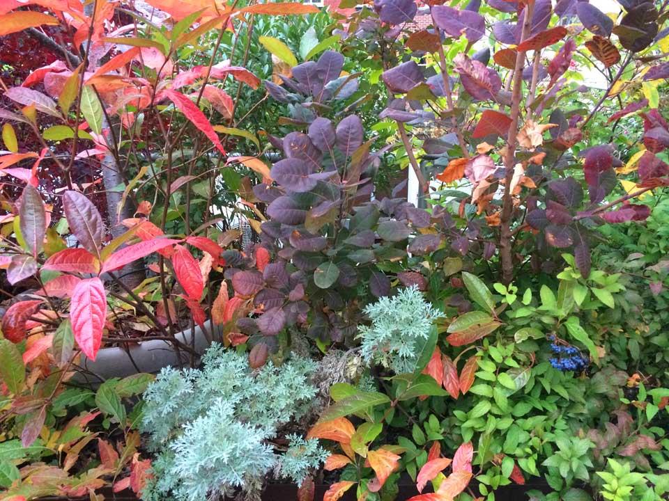 Roof garden in fall