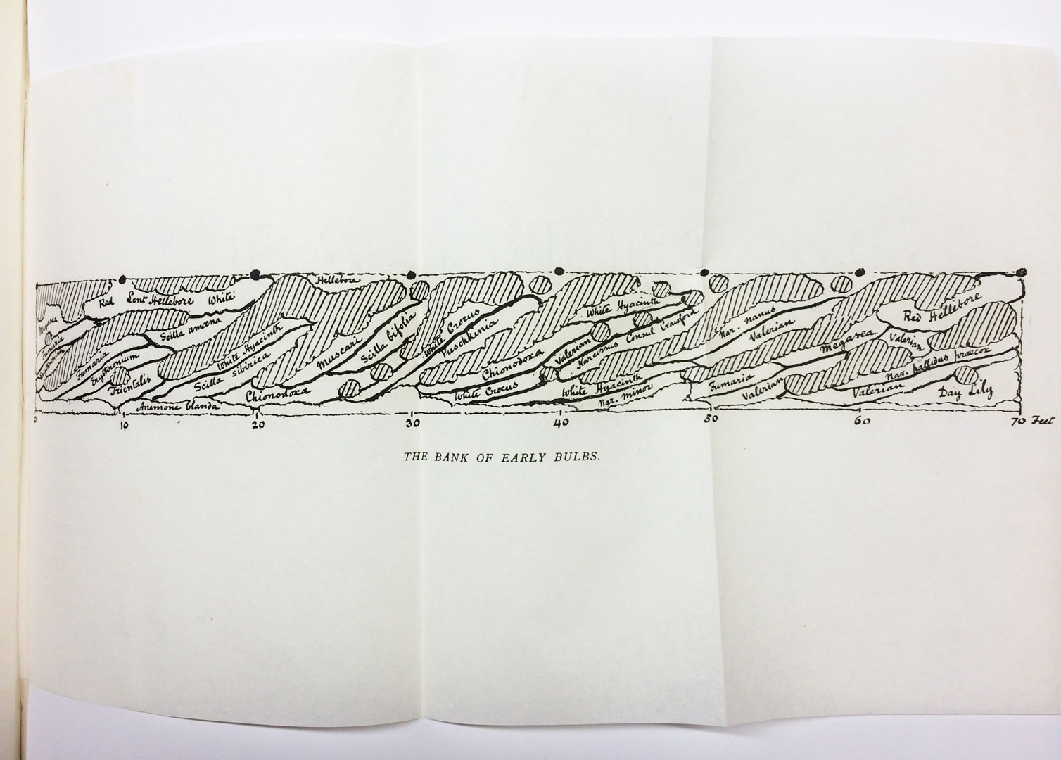 bulb planting plan by Gertrude Jekyll