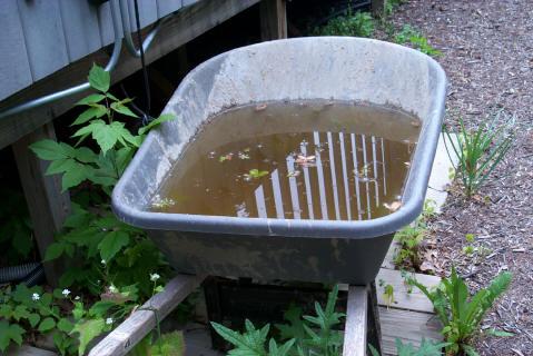 standing water in garden breeds mosquitoes