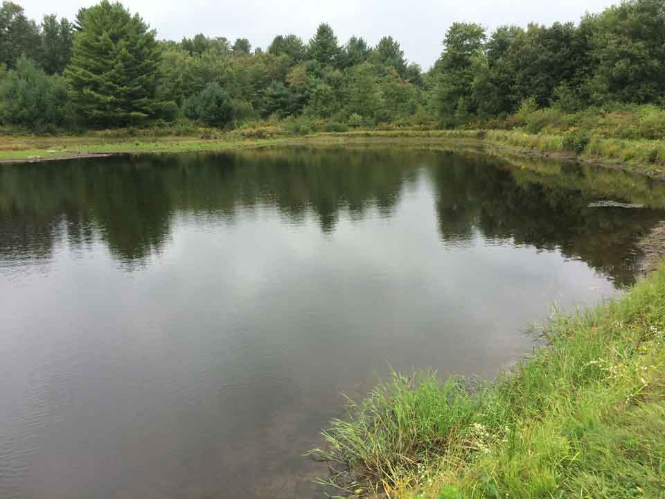 Underestimating the cost of a project and long term maintenance can be significant. Turning a large pond into a meadow is working against the course of nature and therefore costly.