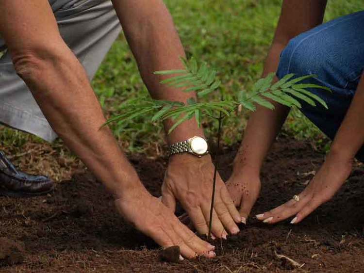 planting a tree together