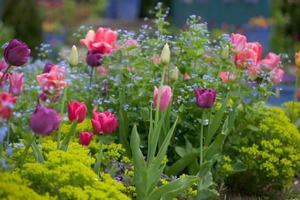 Tips+for+designing+your+garden.jpeg