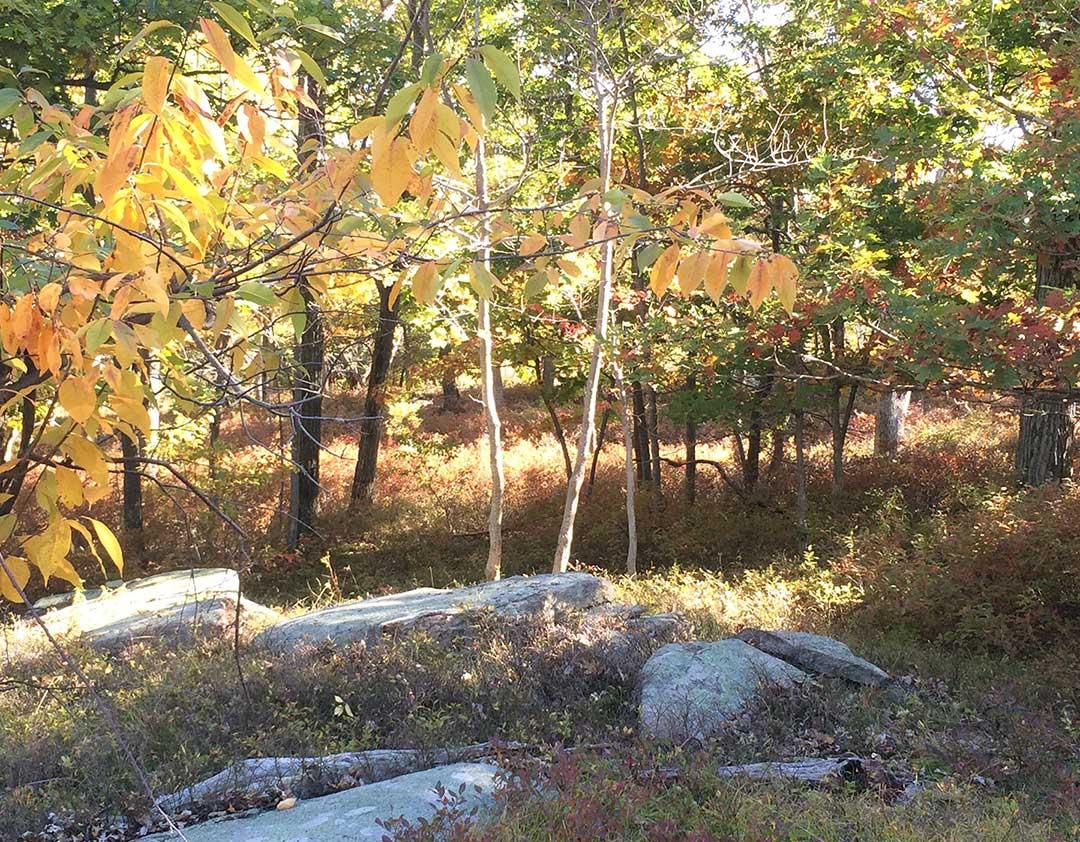 A native northeast landscape in autumn.