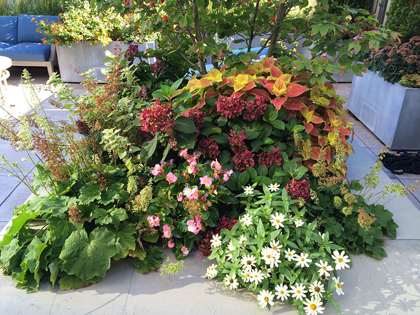Large terrace planters need a significant amount of irrigation to be successful. They also need a constant application of fertilizer.