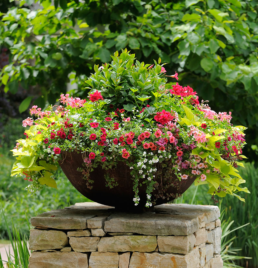container gardening 123