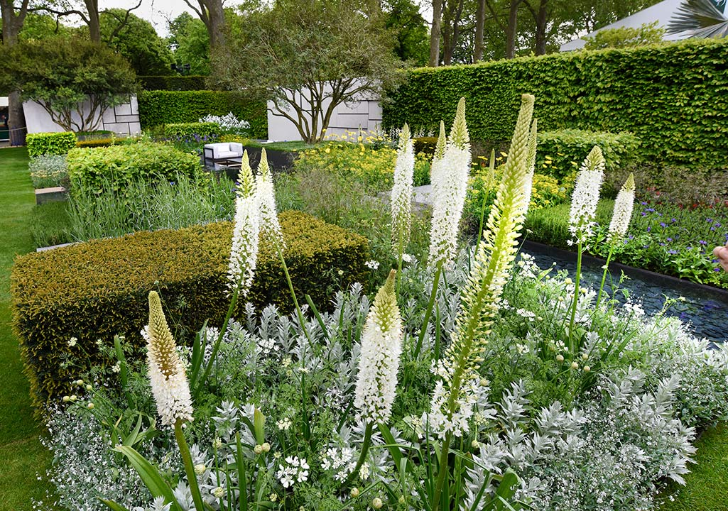 green and white contemporary garden