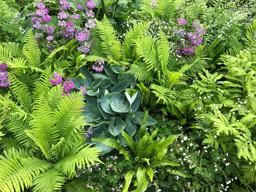 Native Plants Garden Design Blog Ideas For Residential Gardens
