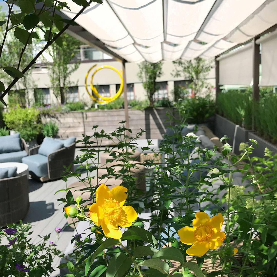 Pergola shade roof garden.jpg