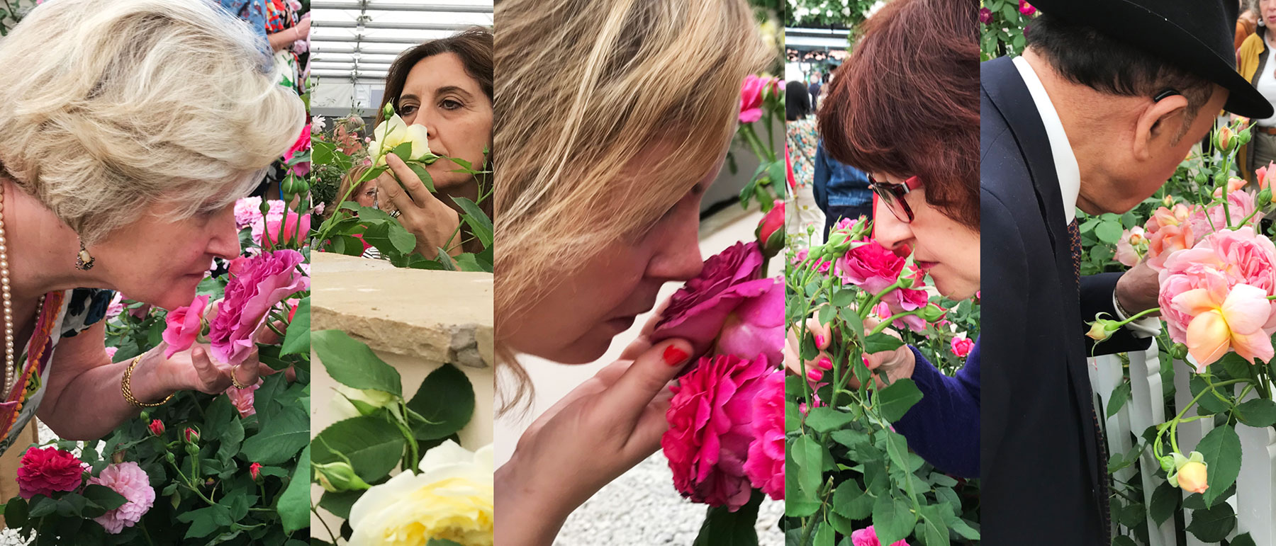 Inhalling the luxurious scent of roses at the Chelsea Flower Show. ©ToddHaimanLandscapeDesign2019