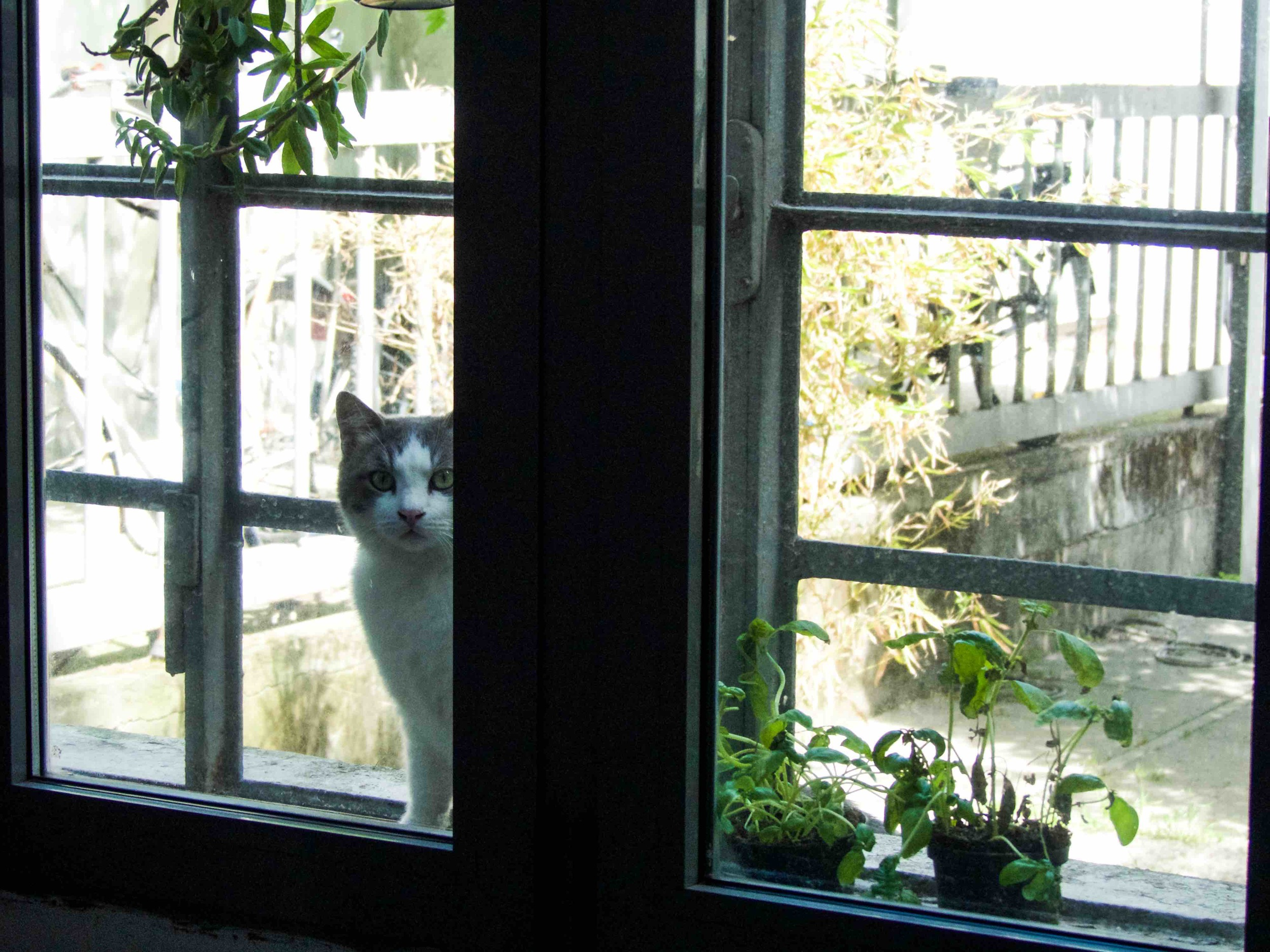 My food inspector - Pierino the cat