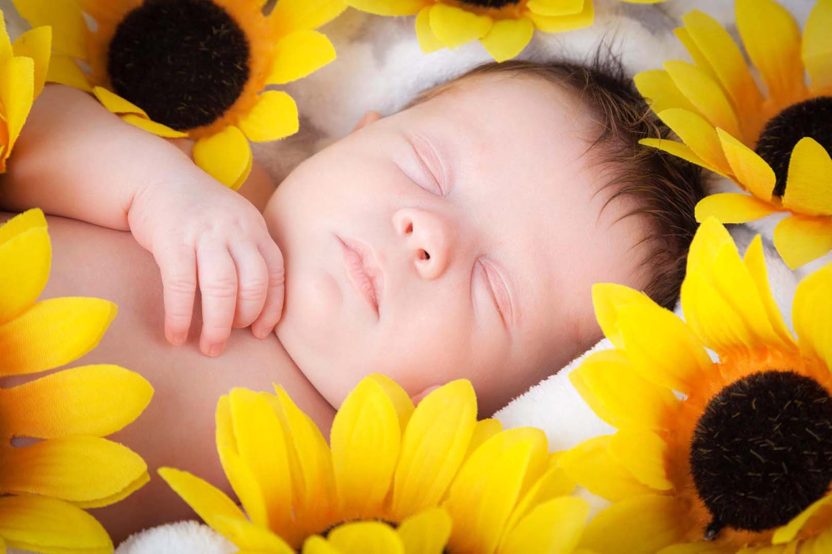 holly sunflowers.jpg