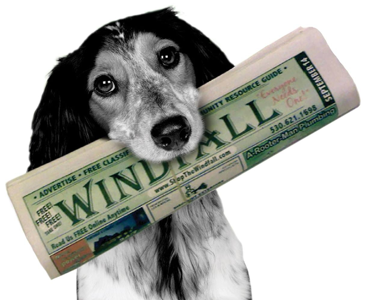 Windfall_Doggie_with_paper.jpeg