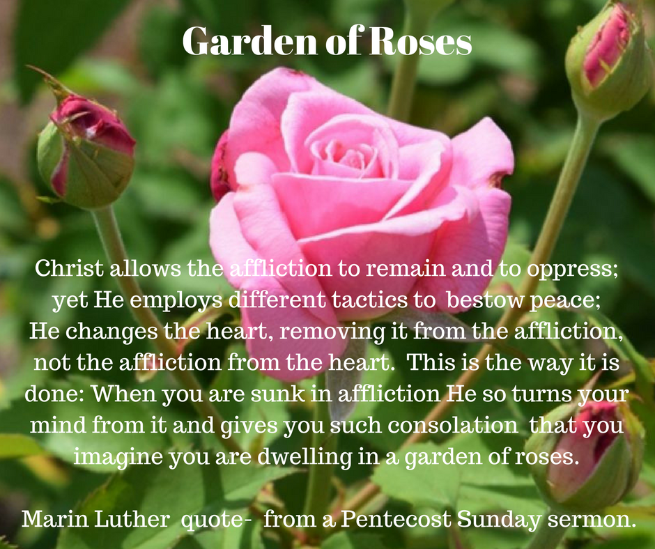 Rose Garden - Martin Luther quote